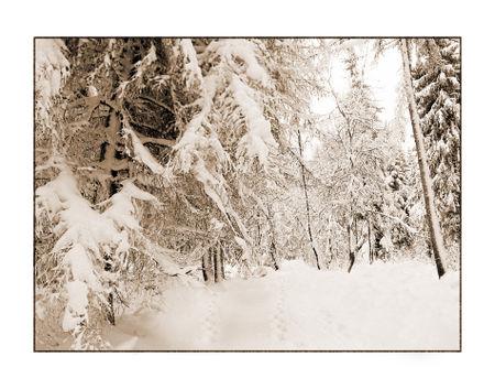 Winter-7-kopie