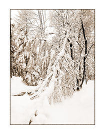 Winter 9 by Theo Broere