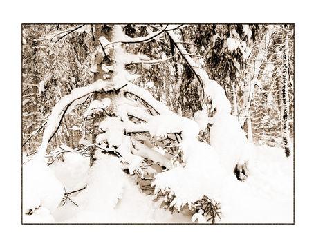 Winter-10-kopie