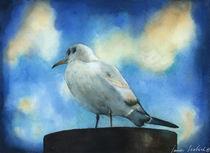 Seagull von zapista