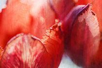 Rote Tulpen by Petra Dreiling-Schewe