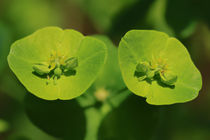 Kleine Blüten ganz groß by Bernhard Kaiser