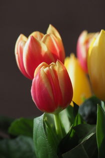 Tulpen von Uwe Hennig