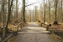 Waldwanderweg mit Brücke. von fischbeck