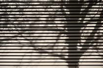 Schattenzweige by Bastian  Kienitz