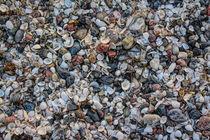 Muscheln & Steine by mario-s