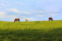 Horses von mario-s