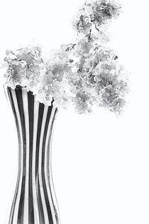 Weißer Flieder in Vase by Petra Dreiling-Schewe