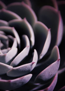 DARKSIDE OF SUCCULENTS IIB HF by Pia Schneider