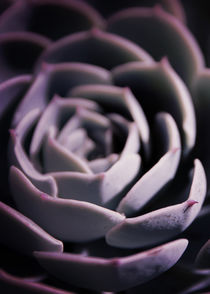 DARKSIDE OF SUCCULENTS IIA HF by Pia Schneider