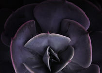 DARKSIDE OF SUCCULENTS VIII-3 by Pia Schneider