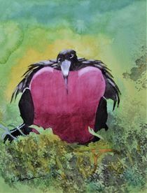 Adult Male Great Frigatebird by Warren Thompson