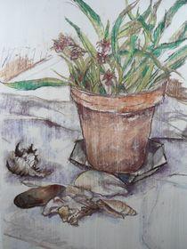 Stilleben mit Pflanze und Muschelschalen von Gregor Wiggert