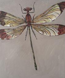 Libelle vor grauem Hintergrund von Gregor Wiggert