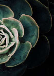 DARKSIDE OF SUCCULENTS IV-2 von Pia Schneider