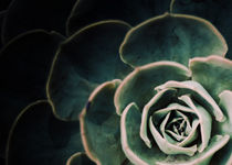 DARKSIDE OF SUCCULENTS IV-3a von Pia Schneider