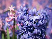 blooming colors by Erik Mugira