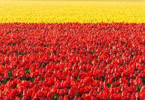 flowerfieldline by Erik Mugira