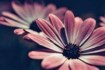 flowers von emanuele molinari