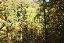 Waldsee #2.  von fischbeck