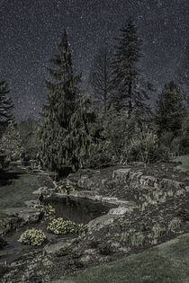 Moonlit Garden by Colin Metcalf