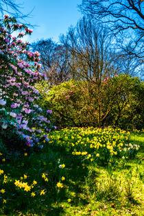 Spring Garden by Colin Metcalf