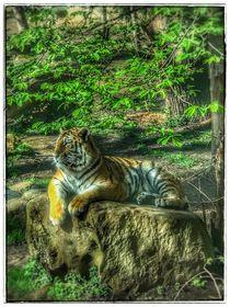 Tiger in der Natur von Stefan Wehmeyer