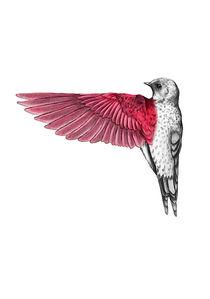 Red Bird von thenewblack design