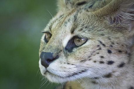 Dsc3873-dot-serval5-08-12