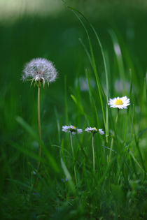 Frühling im Gras von Bernhard Kaiser