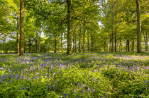 Spring Blue & Green by Malc McHugh