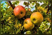 Äpfel by mario-s