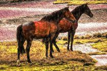 Pferde von mario-s
