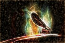 Libelle by mario-s