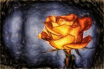 Rose by mario-s