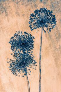 Allium von mario-s