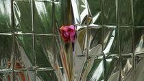 Rose.  von Bernd Eglinski