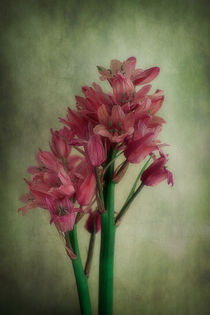 Vintage Bluebells In Pink by CHRISTINE LAKE