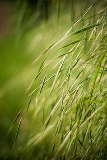 Gras by Thomas Schwarz