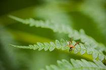 Spinne auf Farnblatt von Thomas Schwarz
