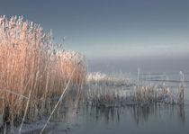 Eismeer von Ulrike Haberkorn