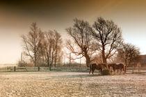 Winterpferde by Ulrike Haberkorn