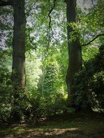 zwischen den Bäumen by Anja Verzelak