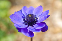 Schöne Blüte von Bernhard Kaiser