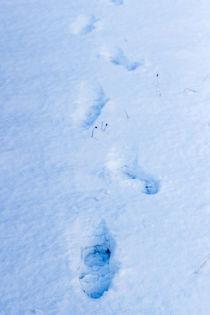 Fußspuren im Schnee by Thomas Schwarz