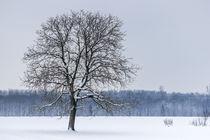 Ein Baum im Winter by Thomas Schwarz