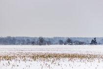Feld im Winter von Thomas Schwarz