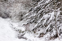Bachlauf im Winter by Thomas Schwarz