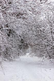 Schneebedeckter Weg durch den Wald by Thomas Schwarz