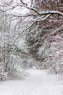 Schneebedeckter Weg im Wald by Thomas Schwarz